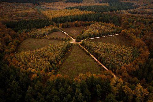 """""""De Eenzame Eik"""" vanuit de lucht, Nederland"""