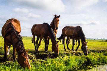 Paarden in de wei 2 van Brian Morgan