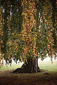 Herfst van Emilie Luikinga