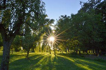 Zonsondergang in een zomerse boomgaard