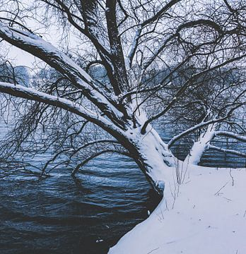Boom in sneeuw van André Scherpenberg