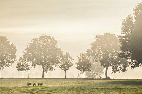 Hardloper in de mist van
