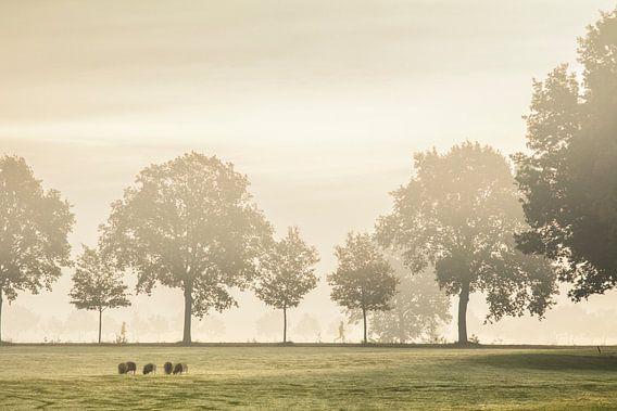 Hardloper in de mist van Teuni's Dreams of Reality