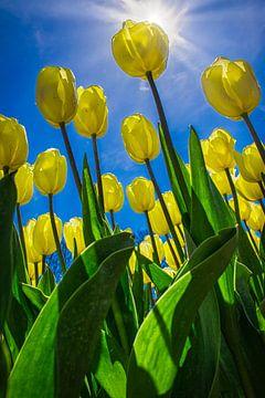 Gele tulpen in de lentezon van Rietje Bulthuis