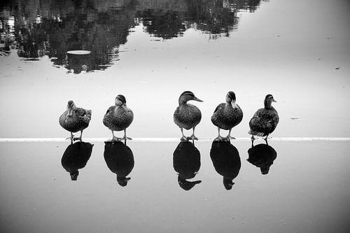 Fünf Enten von