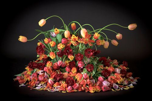Tulpen van Dirk Verwoerd
