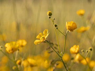 Goud bloemenveldje van Maaike Munniksma