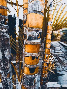 Palmbomen La Isla Bonita van Stoka Stolk