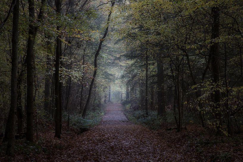 the autumn forest van Koen Ceusters