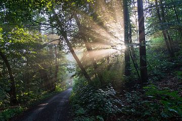 Lichte stemming in het donkere bos van Adriana Mueller