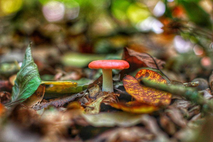 The lonely mushroom van Maurice Hoogeboom