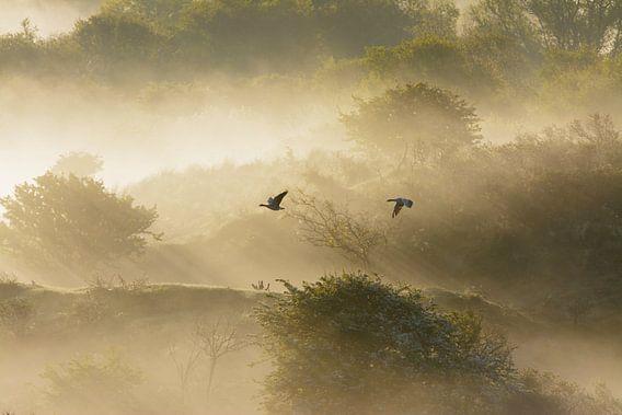 Magische vlucht van ganzen van Remco Van Daalen