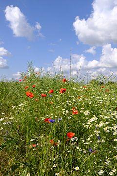 Kleurrijk zomerveld van Ostsee Bilder
