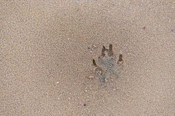 Hundefußabdruck am Sandstrand von Matthias Korn