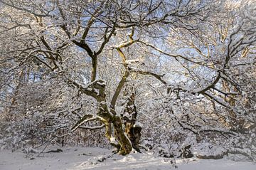 Winter Märchen Baum