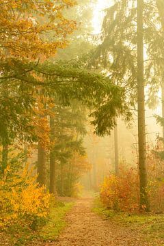 Sentier à travers un paysage de pins brumeux sur Sjoerd van der Wal