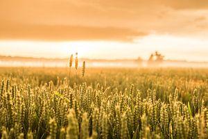 Gouden uurtje op het veld van