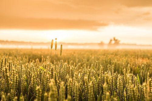 Gouden uurtje op het veld
