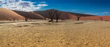 Panorama van de Deadvlei met dode bomen, Namibië van Rietje Bulthuis