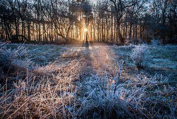 Winterse zonsopkomst in het bos van Roel Beurskens