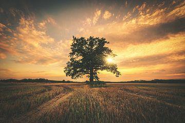 Einsamer Baum im Sonnenuntergang