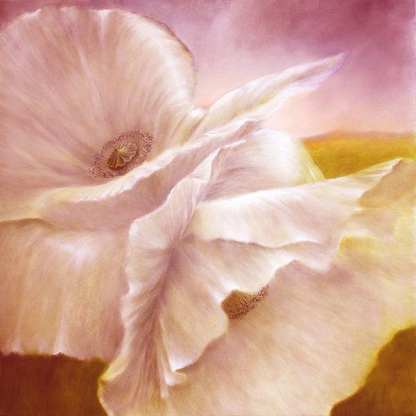 witte klaproos van Annette Schmucker