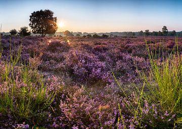 Die Hilversumer Heide bei Sonnenaufgang 2 von Emile Kaihatu