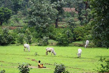 Indiase vrouw zit bij haar koeien van Cora Unk