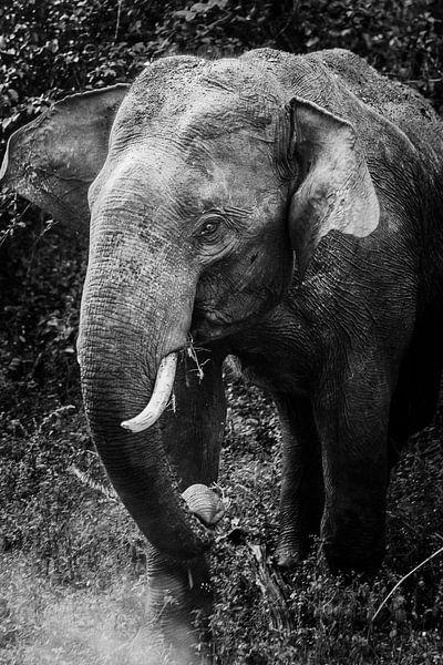 Zwart/wit Sri Lankaanse olifant van Rebecca Gruppen