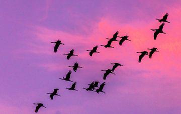 najaarstrek kraanvogels van Harry Siegers