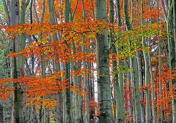 Stam-Gasten in de Herfst (Beukenbos) van Caroline Lichthart