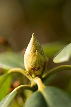 Botanische Kunst, Makroaufnahme einer Grünpflanze mit Blüte von Karijn | Fine art Natuur en Reis Fotografie