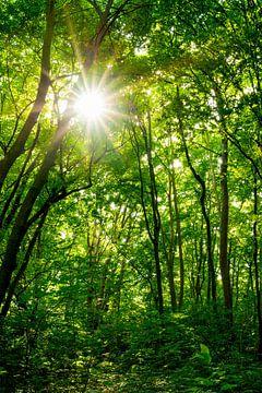 Zon in het bos van Günter Albers