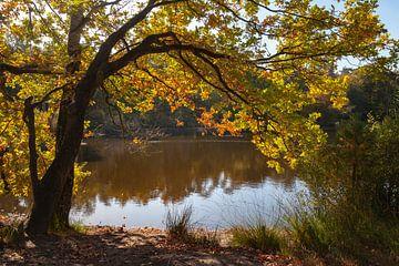 Schöne Aussicht auf die Wälder und Moore von Oisterwijk von Nel Diepstraten