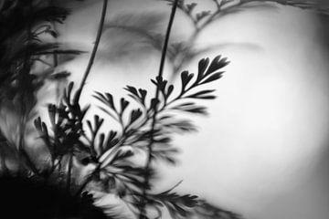 Macro - Varen von Angelique Brunas