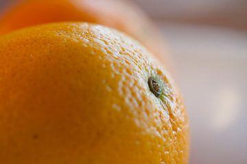 Sinaasappel van Martijn Smit