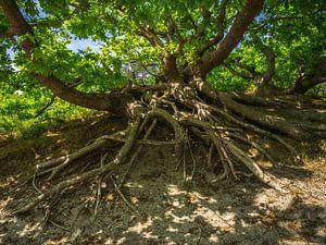 Baum mit Wurzeln von Martijn Tilroe