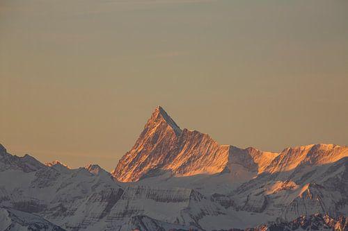 Sonnenaufgang am Finsteraarhorn mit Alpenglühen