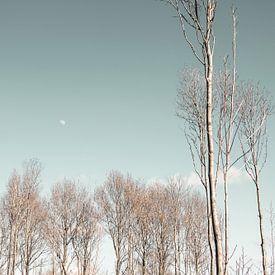 Bomen in de winter van Carla van Zomeren