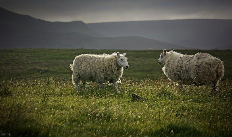 impressions of scotland - was waiting 4 u van Meleah Fotografie