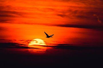 Eend vliegt ondergaande zon voorbij van Jelle Mijnster