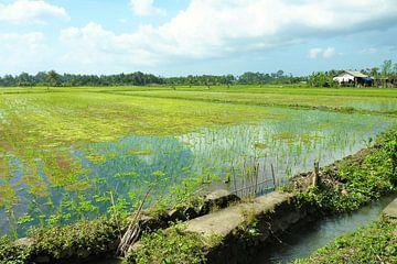 Bali rijstvelden  van Bianca Louwerens