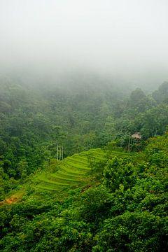 Reisterrasse in Vietnam, Asien von Ellis Peeters
