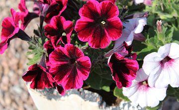 Blumen von Rieky Mooren