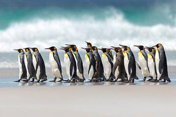 Pinguin-Marsch von Gladys Klip