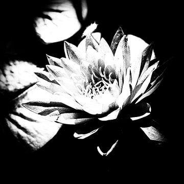 Les Jardins D'eau von Esther Swaager ( Studio Toet)
