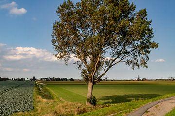 Boom in Hollandse polder van Paul Veen