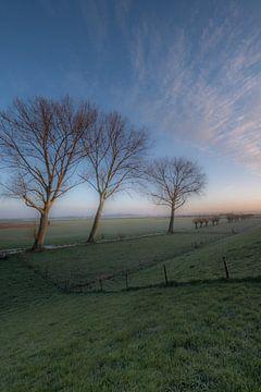 Bomen in weiland van Moetwil en van Dijk - Fotografie