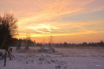 Winterliche Hitze in De Peel von Liesbeth Vaes