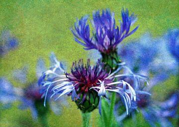 Kornblume blau van Rosi Lorz